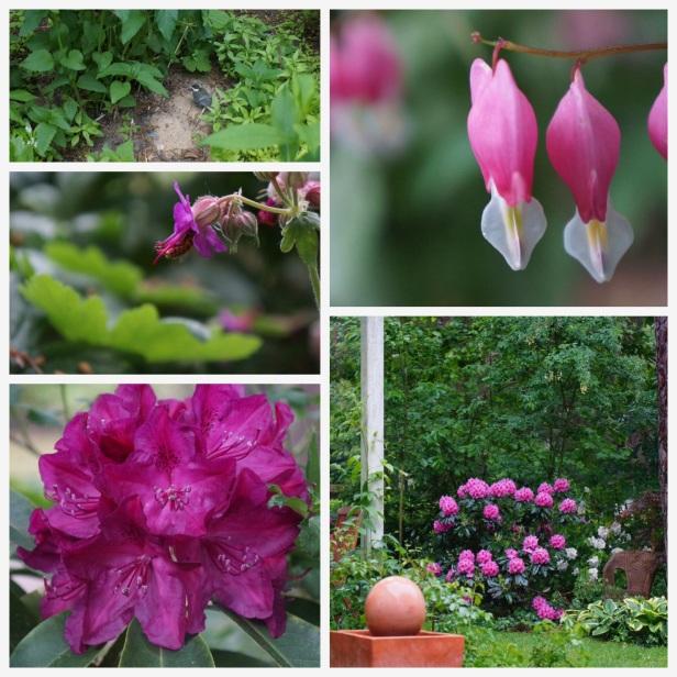 Dicentra und Rhododendron