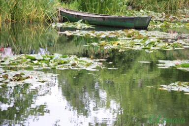 Das Boot des Gärtners im Seerosenteich.