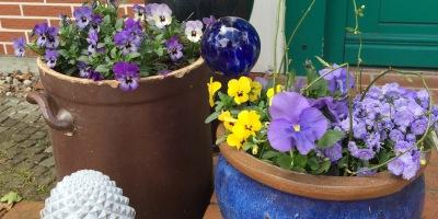 Blaue Töpfe mit grauem Pinienzapfen