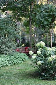 Hortensie Limelight im Schattengarten als Baumringbepflanzung Kiefer