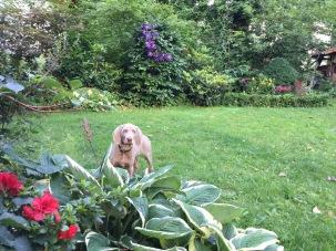 Ein neuer Wachhund für den Schattengarten 2015
